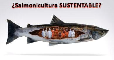 salmonicultura
